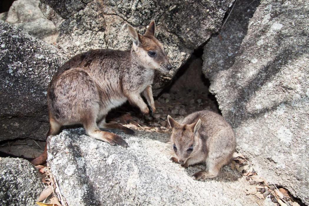 79d120088a91 A la découverte des animaux d Australie - La naturaliste voyage